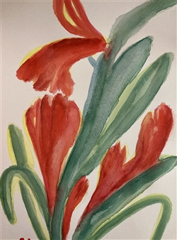 Tulip C