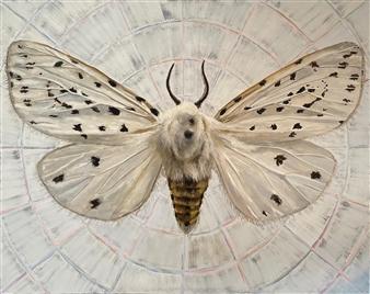 "Ermine Moth Oil on Canvas 48"" x 60"""