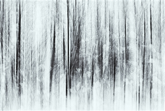 Essence of Winter I