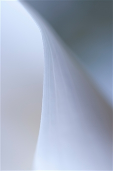 """Flowing Photograph on Aluminum 24"""" x 16"""""""