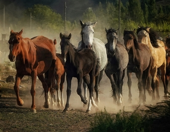 Horse Community