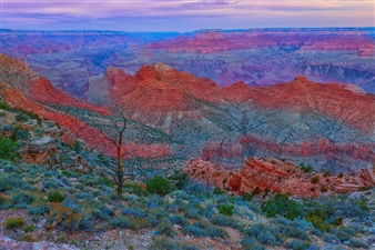 Scenic Splendour