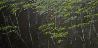 Night in the Botanical Garden