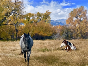 Chief's Horse