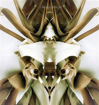 Original Bug Series