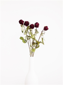 Withered Roses In a White Vase III