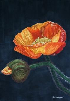 "Orange Poppies Digital Print on Aluminum 30"" x 21"""