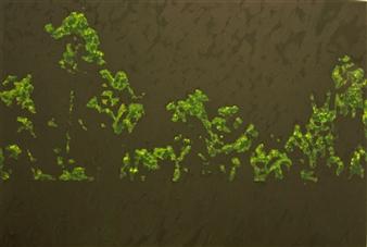 "Night in the Garden 1 Oil & Acrylic on Canvas 28"" x 39.5"""