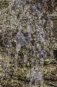 """Lichen Dribble Green Brown Metal Sublimated Print 18"""" x 12"""""""