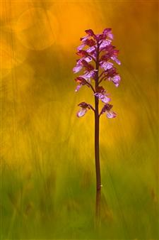 "Last Spring Light II Photograph on Acrylic Glass 59"" x 39.5"""