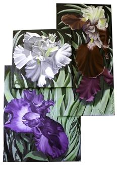 "Iris Trilogy Oil on Canvas 34"" x 23"""