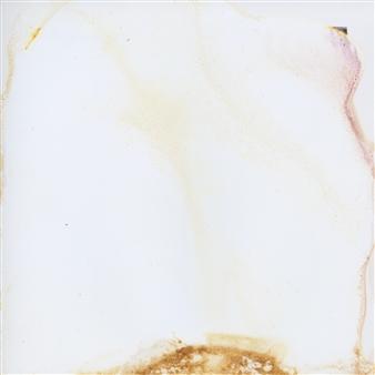 "Toxic Garden #1 Photograph on Fine Art Paper 6"" x 6"""
