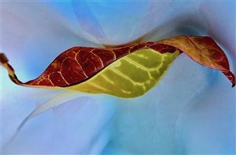 "Bird Leaf Archival Pigment Print 12"" x 18"""