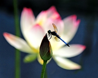 """Dragon Fly Resting Archival Pigment Print 16"""" x 20"""" <span style='color:red;'>Sold</span>"""