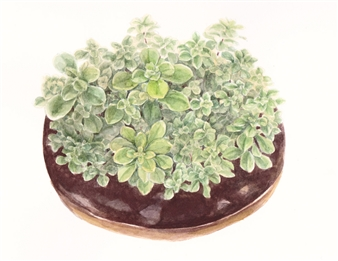 """Succulent Donut 6 Watercolor on Paper 5"""" x 7"""""""