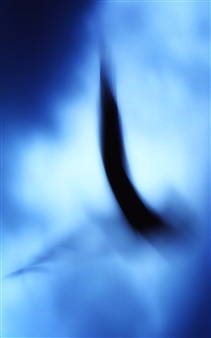 "Abstract Seagul Photograph on Plexiglass 60"" x 45"""