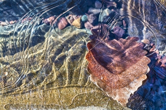 Leaf Ripples Stone