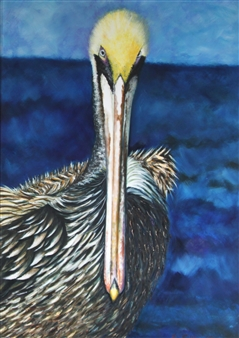 Pelican