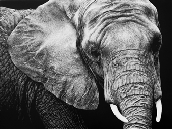 """King of the Land Ink & Clay on Scratchboard 9"""" x 12"""""""
