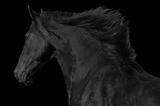 Stallion King 1