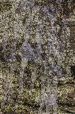 Lichen Dribble Green Brown