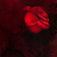 Trygve Amundsen - Single Red Rose